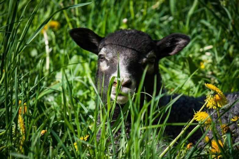 Jonas Enjoys the Green Grass