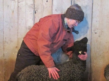 A Year in the Life of a Sheep Farmer