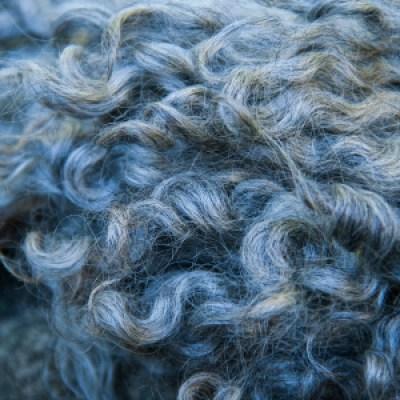 Gotland Adult Fleece