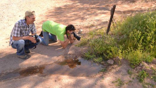 Appreciating native wildlife