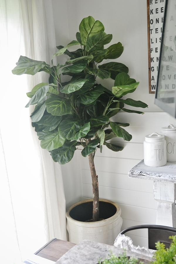in our new house in michigan we have found a yet another fiddle leaf to start this new journey in this michigan home yet help us bring a little memory