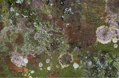 Lichen Layer