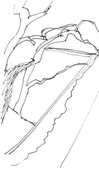 ScotsResSketch004