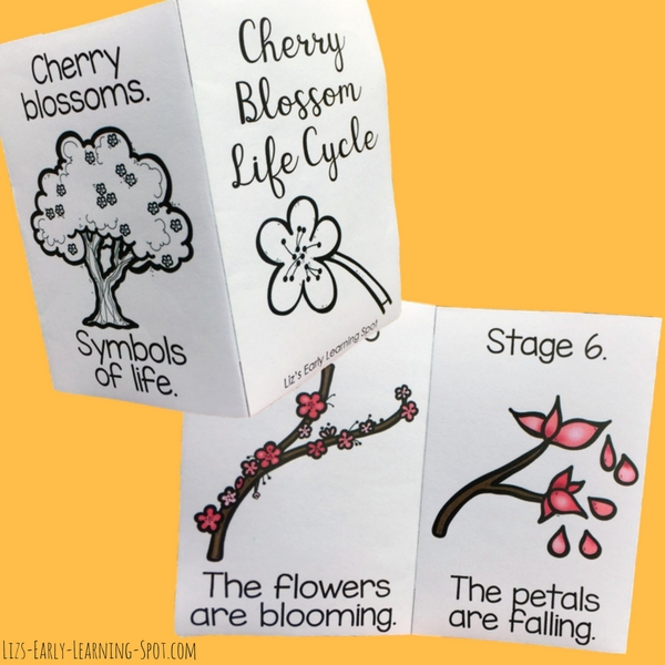 Learn about the cherry blossom life cycle with these free readers!