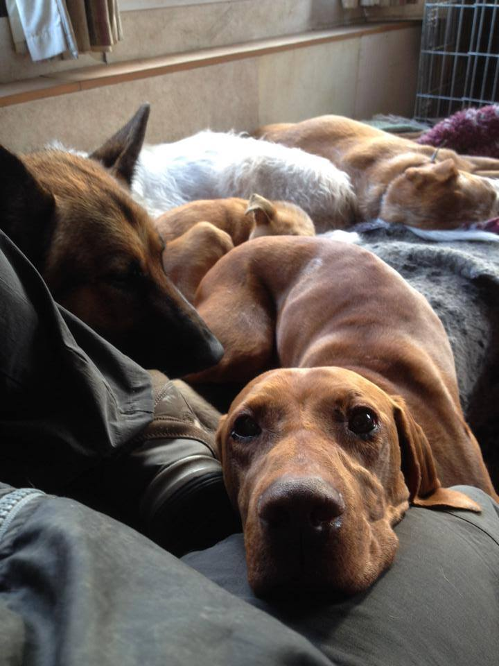 Lizzie S Barn Sanctuary A Family Run Sanctuary For Dogs