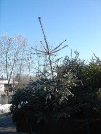 CBEA 14.01.2006 - 15