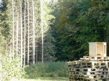 Huettenwochenende 22.10.2005 - 078
