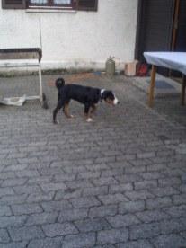 LaJuZi Helferfeier 30.07.2006 - 10