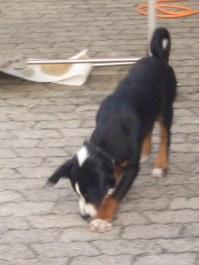 LaJuZi Helferfeier 30.07.2006 - 14