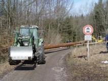Maibaum Reinholden 26.03.2005 - 25