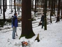 Maibaum Umschneiden 12.02.2005 - 05