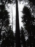 Maibaum Umschneiden 12.02.2005 - 10