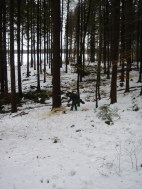 Maibaum Umschneiden 12.02.2005 - 11