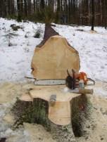 Maibaum Umschneiden 12.02.2005 - 14