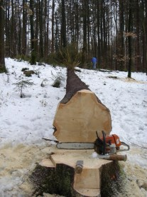 Maibaum Umschneiden 12.02.2005 - 15