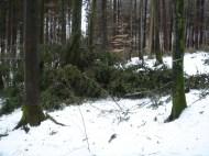 Maibaum Umschneiden 12.02.2005 - 24