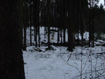 Maibaum Umschneiden 12.02.2005 - 38