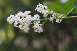 weiße Blumen documenta