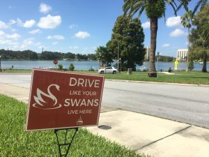 Drive Like Your Swans Live Here