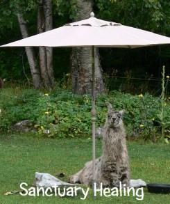 sanctuary healing, homeopathy for llamas, alpaca homeopath