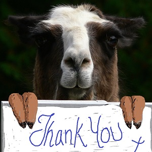 sponsoring and donating to the llama sanctuary