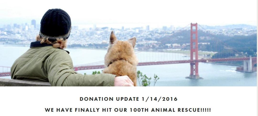 dogpatch donating to animal rescue