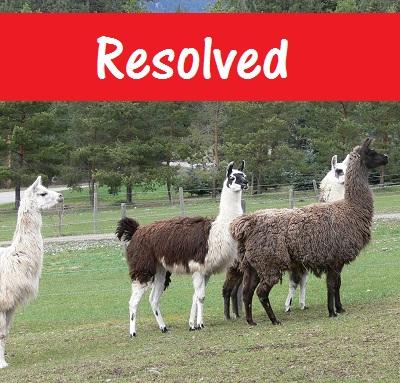 placing llamas into new loving homes
