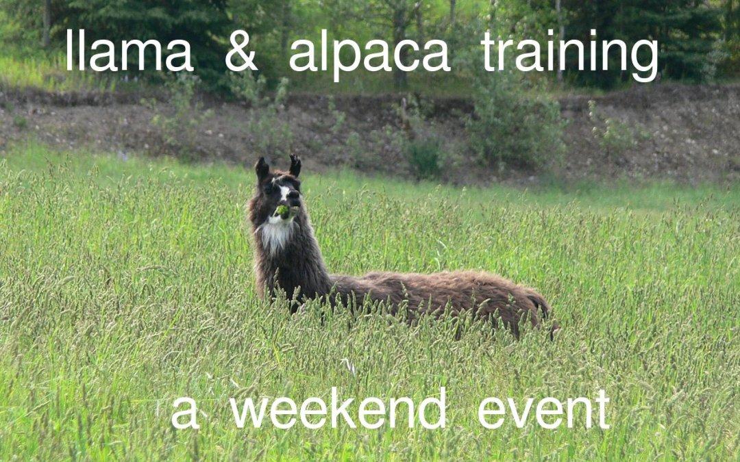 Llama Alpaca Training Weekend