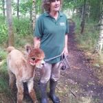Tiny Ted alpaca training