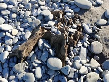 Tree stumps emerge on Llanrhystud beach