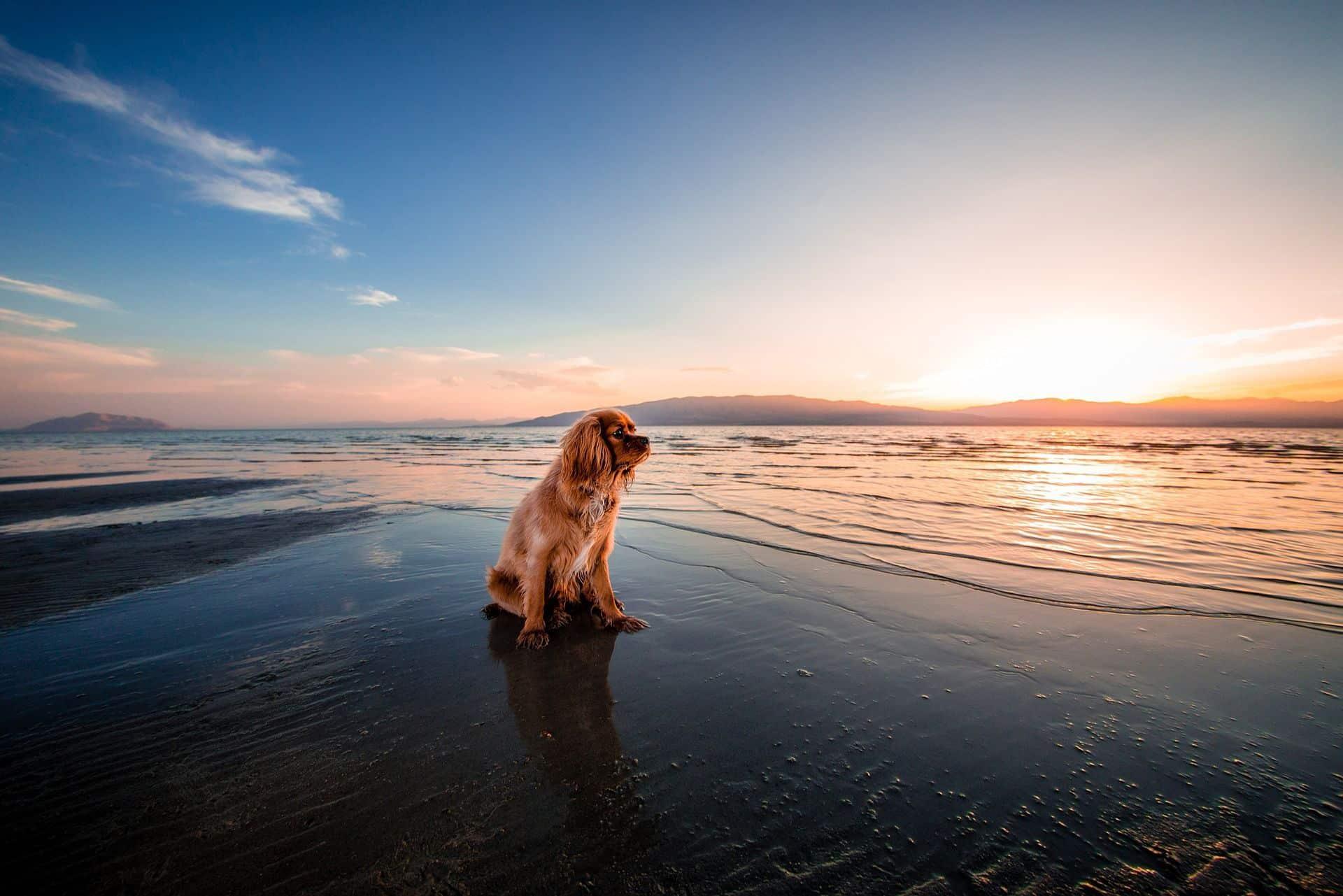 Playas para perros en Italia