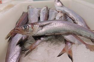 Pescadilla Mercat de Llíria - Llíria ORG