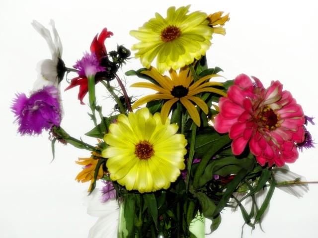 sep15flowers