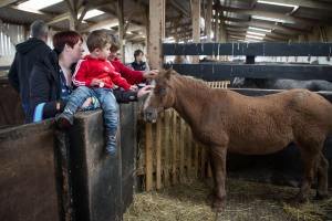 Gwilym enjoying the attention from visitors