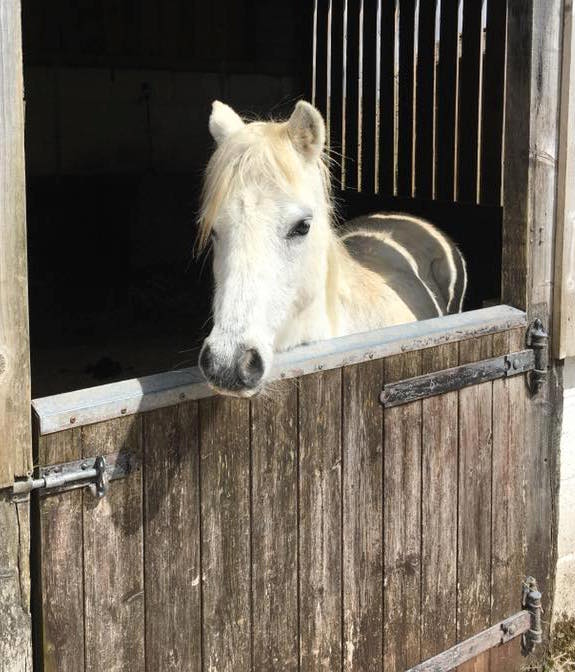 Lluest Horse and Pony Trust