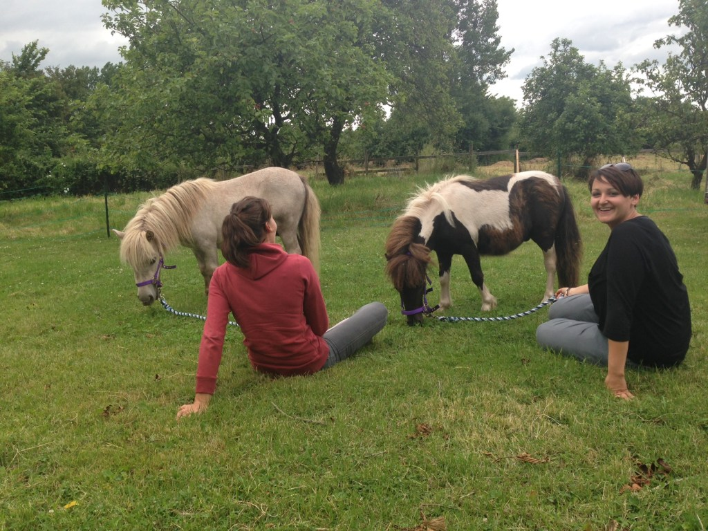 rescued ponies at their new home