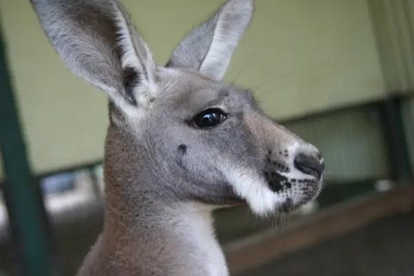 austrailian animals photo essay