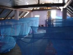 Mosquito Net City!