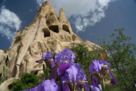 Cappadocia Iris