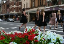 Sydney Petunias (the flowers not the girls)