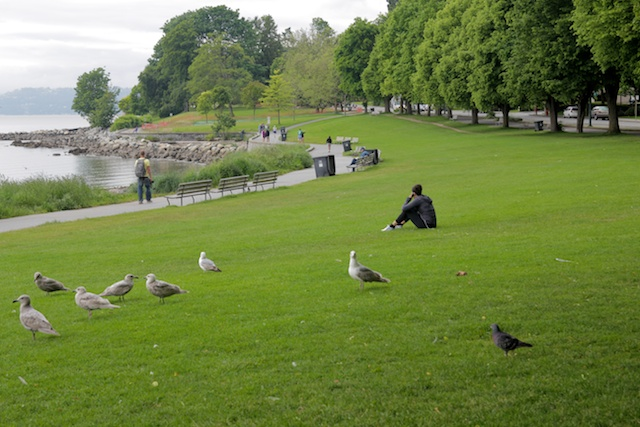Stanley Park Gulls & Girl