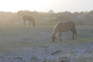 Wild Horses...wouldn't drive me away...