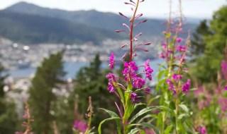 Bergen Flowers