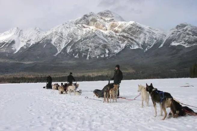 Dog Sledding in Jasper