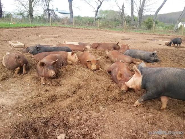 Lima Family Farms
