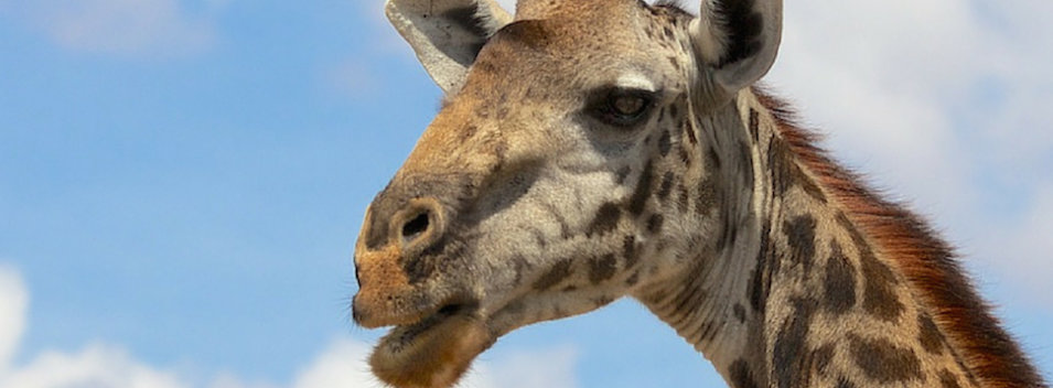 Photo Essay – Tanzania: Animals Gone Wild!
