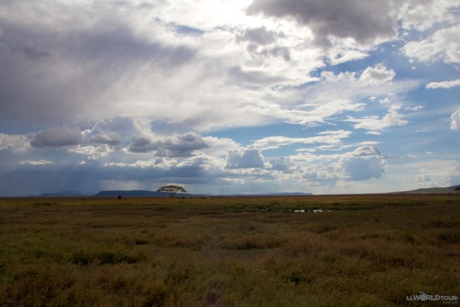 The Serengeti Plains