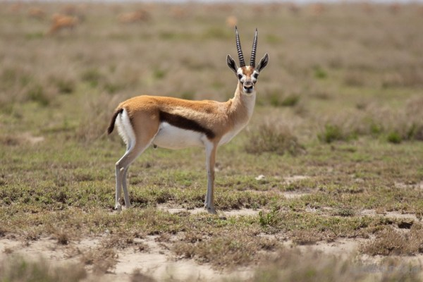Tanzania Animal Photos : Photo Essay Tanzania Animals