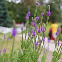 lincoln park gardens
