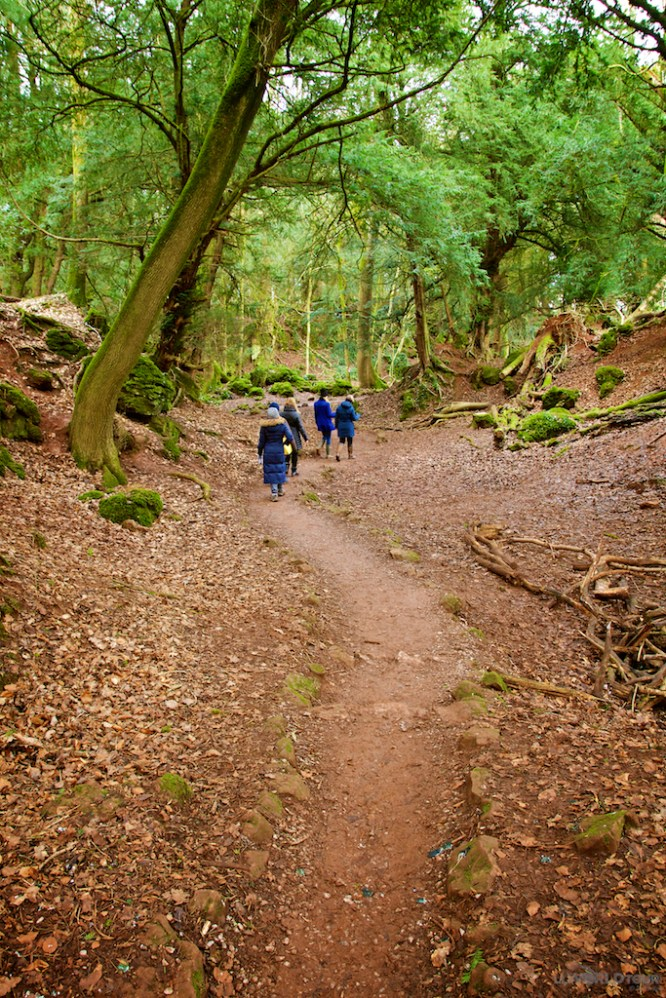 Forest of Dean26